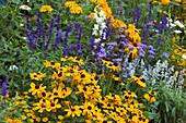 Sommerblumenbeet : Rudbeckia hirta (Sonnenhut), Salvia farinacea (Mehlsalbei), Ageratum (Leberbalsam), Antirrhinum (Löwenmäulchen)