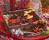 Zutatenstil für Basteln im Herbst : Hagebutten, Ampelopsis (Scheinrebe)