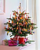 Abies nordmanniana (Nordmanntanne) als Nasch - Weihnachtsbaum
