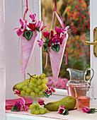 Cyclamen (Alpenveilchen) in hängenden spitzen Tüten im Fenster, Vitis