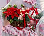 Weihnachtlicher Geschenkkorb mit Euphorbia pulcherrima (Weihnachtsstern)
