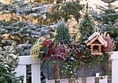 Winterlicher Balkonkasten mit Vogelfutterhaus