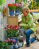 Tulipa 'Ballade' 'Füsilier' (Tulpen), Hyacinthus (Hyazinthen)