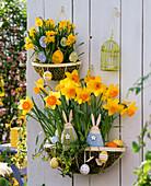 Wandkörbe österlich : Narcissus 'Suada' 'Tete a Tete' (Narzissen)