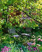 Schattiger Sitzplatz unter großem Baum