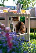 Katze Minka sitzt im Beistelltisch, Kaffeekanne, Mineralwasser