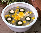 Blüten von verschiedenen Narcissus (Narzissen) und Schwimmkerzen