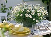Tischdekoration mit Strauchmargeriten