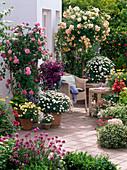 Rosa 'Ghislaine de Feligonde' (Historische Rambler - Rose als Stämmchen)
