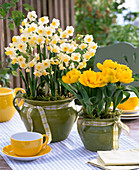 Narcissus 'Avalanche' (Narzissen), Tulipa 'Yellow Baby'