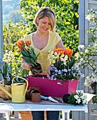 Pinken Kasten mit Tulpen und Narzissen bepflanzen : 1/2