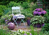 Schattenterrasse mit Hydrangea (Hortensien) und Hosta (Funkie)