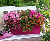 Petunia Easy Wave 'Pink' , Veranda 'Neon' (Petunien)