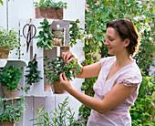 Weiß angemalte Obststiegen als Regale für Kräuter