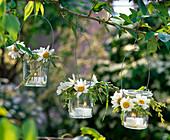 Windlichter mit Leucanthemum (Frühlings - Margeriten) und Gräsern