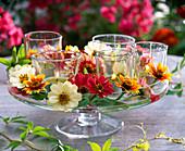 Windlichter in kleinen Gläsern, dekoriert mit Zinnia (Zinnien) auf Glasschale