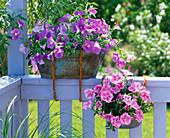 Metall - Wannen als alternative Blumenkästen