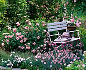 Rosa 'Bonica' (Kleinstrauchrose), Dianthus x allwoodii 'Alice' (Federnelken)