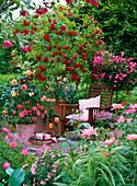 Rosa 'Flammentanz' (Kletterrose), 'Lupo' (Zwergrose auf Stamm)