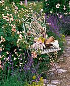 Rosa 'Sweet Meidiland' (Kleinstrauchrose), Lavandula (Lavendel)