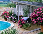Hydrangea (Hortensien), Hosta (Funkie), Spartina