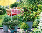 Türkise Töpfe verschieden bepflanzt