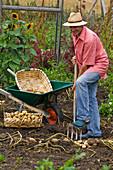 Mann bei der Kartoffelernte