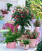 Schattenbalkon mit Fuchsia 'Beacon' (Stamm), 'Paula Jane'