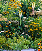 Gelb - weißes Beet mit Stauden und Sommerblumen