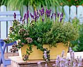 Herbs box