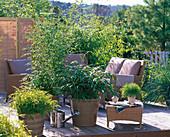 Asiatische Terrasse mit Bambus