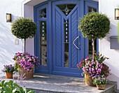Blauer Hauseingang mit Ligustrum (Liguster)