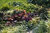 Beet mit Blattschmuckpflanzen
