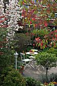 Sitzgruppe auf kleiner Terrasse, Prunus serrulata 'Amanogawa' (Säulen -