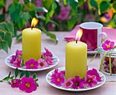 Calibrachoa (Mini - Petunien) um Kerzen