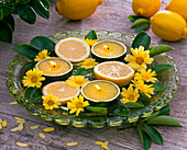 Citrus (halbierte Zitronen und -blätter), Argyranthemum (Margeriten)