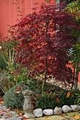 Acer palmatum 'Dissectum Garnet' (Rotlaubiger Schlitzahorn)