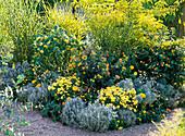 Beet mit Kübelpflanzen in gelb und silbergrau