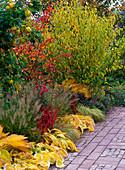 Herbstbeet an Terrasse