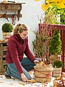 Winterschutz für winterharte Gehölze im Kübel