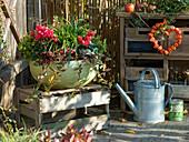 Herbstschale mit Cyclamen (Alpenveilchen)