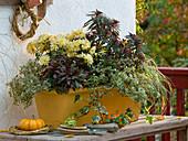 Gelber Balkonkasten mit Euphorbia 'Efanthia' (Wolfsmilch), Chrysanthemum