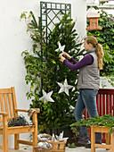 Winterschutz für Rose weihnachtlich dekoriert 2/3