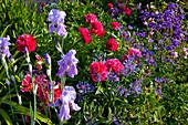 Iris barbata (Bartiris), Paeonia (Pfingstrosen), Aquilegia (Akelei),
