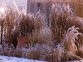 Gräser - Beet im winterlichen Garten