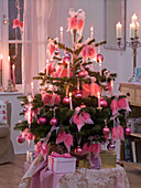 Abies nordmanniana (Nordmanntanne) als Weihnachtsbaum