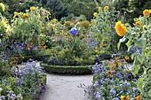 Bauerngarten mit Buxus (Buchs - Einfassung) im Hochsommer, Rondell mit blauer Rosenkugel, Helianthus (Sonnenblumen), Rudbeckia (Sonnenhut), Heliotropium (Vanilleblumen) und andere Sommerblumen