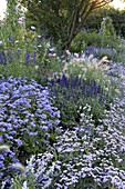 Blaues Sommerblumenbeet mit Ageratum (Leberbalsam), Verbena