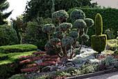 Juniperus (Wacholder) als Garten-Bonsai geschnitten, Chamaecyparis