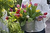 Frau bringt Strauß aus Tulipa (Tulpen) in großer Zink - Schale